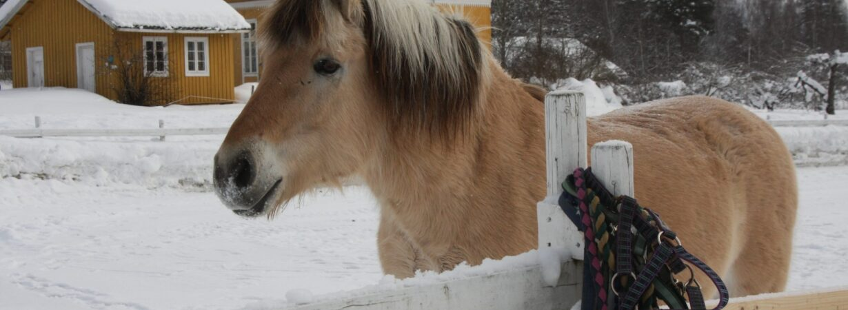Hest_2